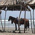 (f) Beach Horses